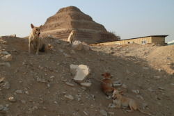 soundquality:  Saqqara, Egypt   2010Dogs resting  near the step pyramid of Djoser.