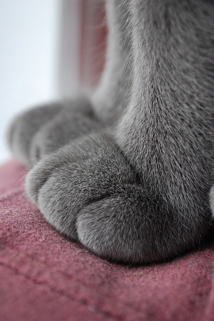thepaintedbench:  Soft Grey Paws