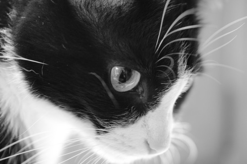 #cat#cats#my photos #black and white #my cats
