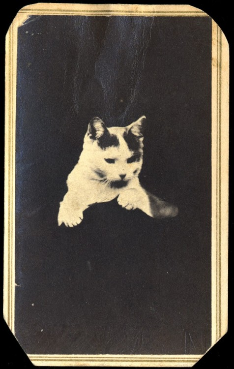 decadentiacoprofaga:  Cat /opaque background by S. L. Upham & Fowler, ca. 1875. Vía.