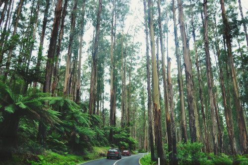 Black Spur Road, Victoria.
