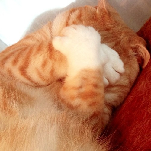 purrfectstitchers:  It can't be morning yet!