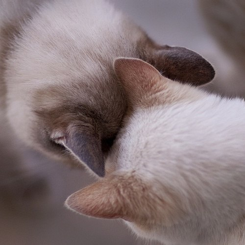 we-love-cute-cats:   Photo, Check my blog for more ;)