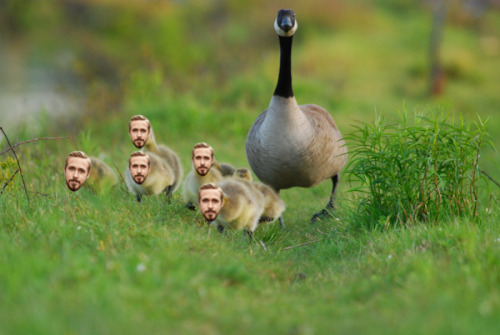 Photoshop Gone Wild: Mother Goose And Her Goslings