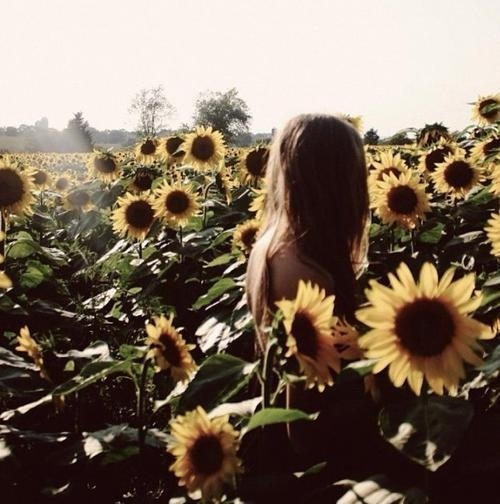 apollo-dancelkumeanit:  sunflowers