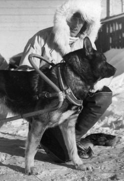 suomisodassa:  Finnish soldier prepares his dog for sledding.