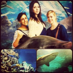 Barcellona aquarium! #me #friends #barcellona #aquarium #spain #holiday
