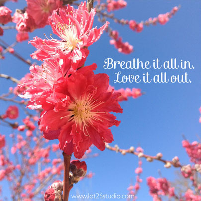 "Monday Inspiration: ""Breathe it all in. Love it all out."" I saw some beautiful fruit trees blooming this weekend and thought this quote was a great reminder to make sure I stop, take a deep breath and appreciate spring has arrived!"