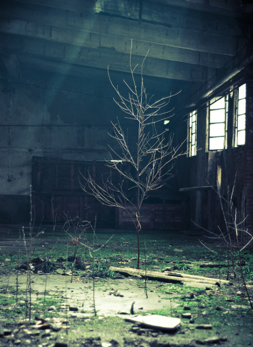 abandonedography:  Life in an abandoned factory by ~Marco-art