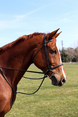 equitate-dont-aggravate:  he's so handsome