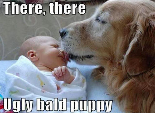 "tastefullyoffensive:  [via]  ""There, there, ugly bald puppy."""
