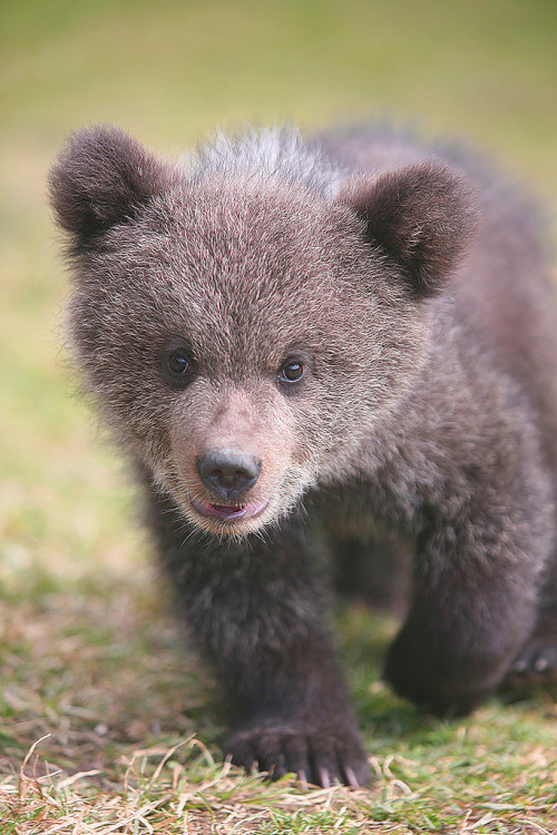llbwwb:  Teddy (by Katka S.)