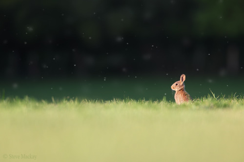 wild-earth:  Rabbit Scape