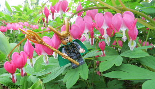 Lego Loki's failed attempt to blend in with the bleeding hearts :D