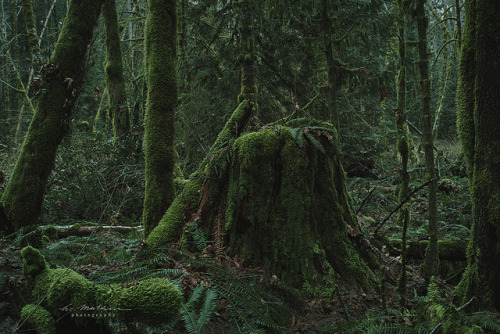 woods of cowichan by hisao_matsui on Flickr.