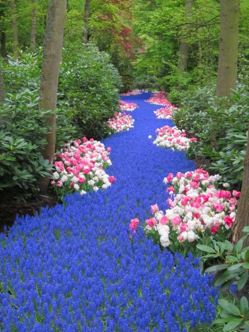 The river of flowers