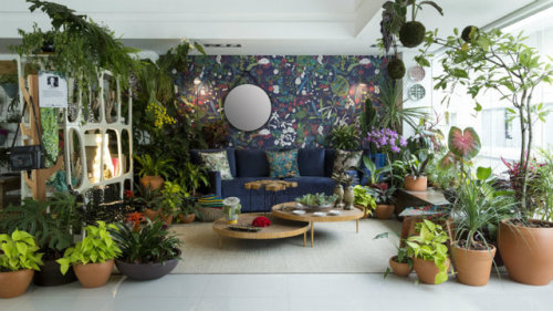 plants coffee table relax jungle
