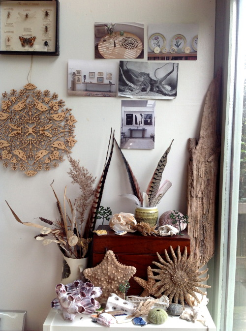 juliamckenzieartist:  Studio things including hare skull, sea urchin from greece I brought back last year, willow pattern fragments, sea weed, feathers & lead model trees