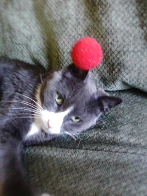 derpycats:  This is Baxter. He has a foam ball stuck to his ear.
