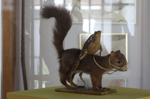 "Is that a frog riding a squirrel? Why yes it is! Neatorama contributor John Farrier recently shared some fascinating photos taken at Le Musée des grenouilles, The Frog Museum in Estavayer-le-Lac, Switzerland. If you're in the mood for some whimsical amphibian taxidermy (and why wouldn't you be?), then this is the place for you. For obvious reasons, this awesome piece that includes a stuffed and bridled squirrel is our favourite. We'll disregard his nakedness simply because the world didn't have Squirrel Underpants back in the 1800s. The frogs were collected and mounted by François Perrier during the mid-19th century:  ""François Perrier loved frogs. From 1848 to 1860, he collected and preserved 108 of them engaging in decidedly non-batrachian behavior, such as attending school, marching in formation and riding squirrels.""  Head over to Neatorama to view more scenes of mid-19th century French life satirically depicted using stuffed frogs. It might just be the strangest thing you see today."