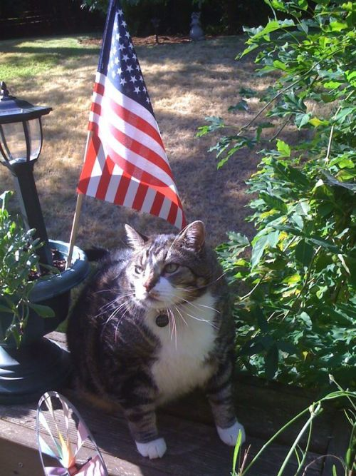 Bugsy loves America!  [reminder: bugsy is my mom's cat]
