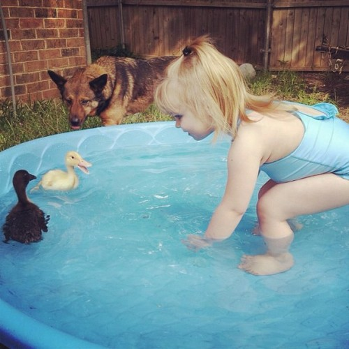 My niece got ducks! She loves them 😊