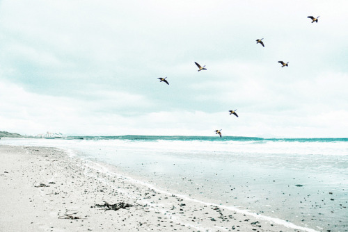 oceanux:  Anyone Can Fly by GeorgiaCF on Flickr.