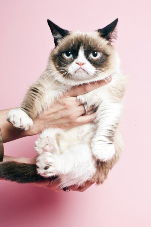 jonathantacos:  Grumpy cat gets a professional photo shoot at Time.