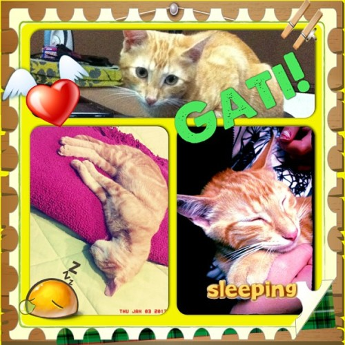 He hates sleeping  #instacollage