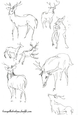 teacupillustrations:  30 second deer sketches