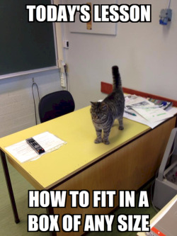 laughingstation:  niknak79:  Today's Lesson with Professor Cat  More FUNNY POST here!
