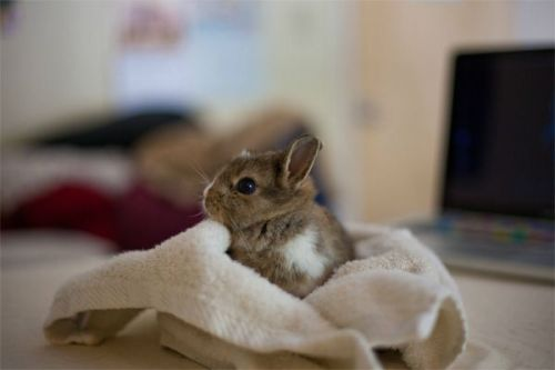 bunnyfood:  (via cutestofthecute:via)