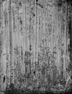 liquidnight:  Mark Sink and Kristen Hatgi Kristen in Tress, 2008 [via Le Journal De La Photographie]