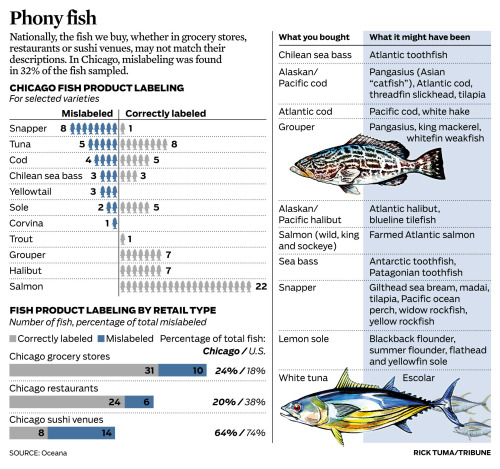 Phony fish: You may not be getting the fish you paid for.   Story: Are Chicago diners getting the fish they paid for?