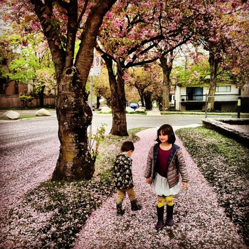 Cherry blossom girl (and boy) #vancouver #spring #pinksnow