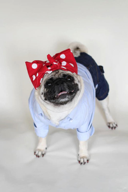 gaminginyourunderwear:  Pin-Up of the Morning! dapperpugs:  YES WE CAN via