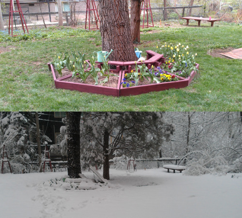 A resident garden before and during last week's snow storm…