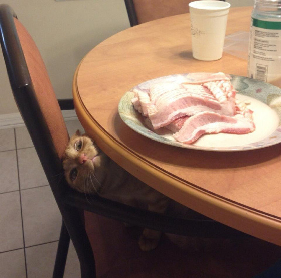 """Oh, don't mind me. Please keep preparing your breakfast."" Via Cute Overload"