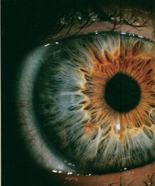 brutalgeneration:  eye #1 (by coral caves)
