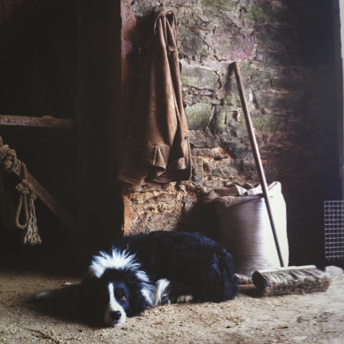benjaminhole:  Ted in the Old Barn.