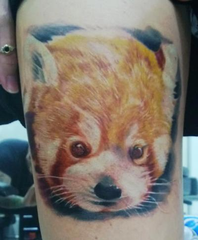 Red Panda done by Brad Giles in Brisbane, Australia.