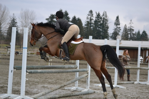 badass-jumpers:  Love the clip mark on this horse!