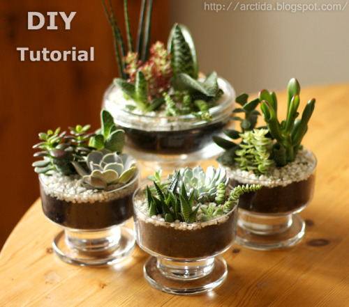 arctida:  DIY tutorial Succulent mini gardens - how to instructions tabletop centerpiece