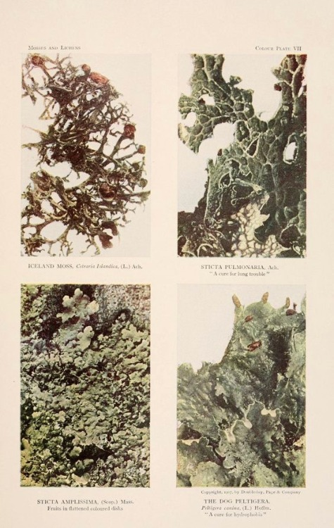 moss nature photography color photography botany nemfrog 1908 early 1900s grid