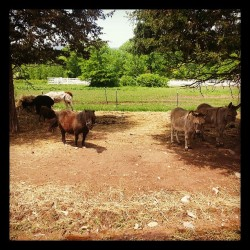Donkeys and a miniature pony! #Weddingplanning