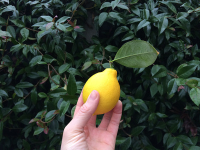 holy-amalfi-ive-grown-a-lemon