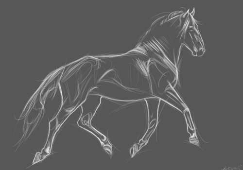 amandatolleson:  Little sketch of a Lusitano aww yiss  I want to sketch like this. I'm not sure how to go about it though.
