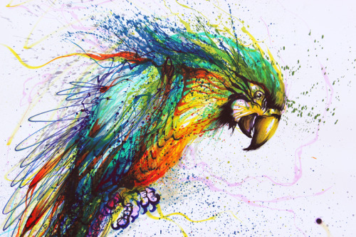 huatunan:    色彩鹦鹉。color parrot  Wonderful!  I love the style and color.