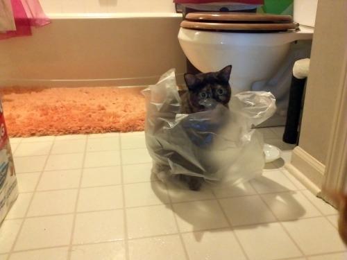 She loves plastic bags