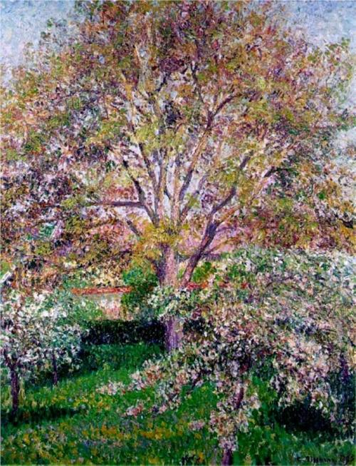 Wallnut and Apple Trees in Bloom at Eragny von Camille Pissarro